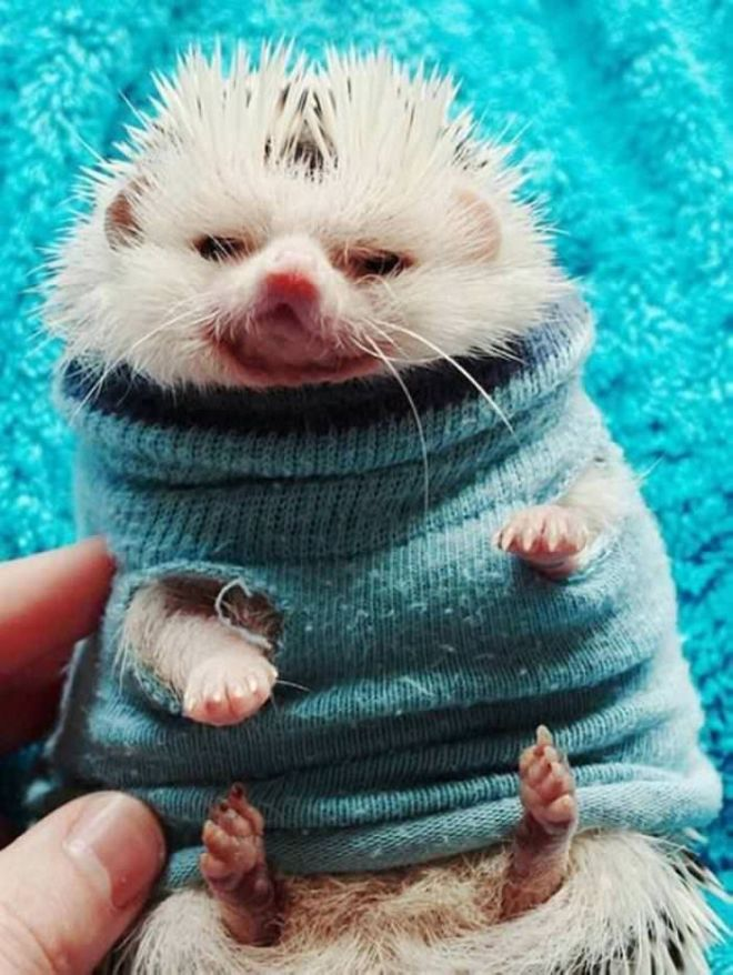 30 Cutest Baby Animals To Leave You Awestruck