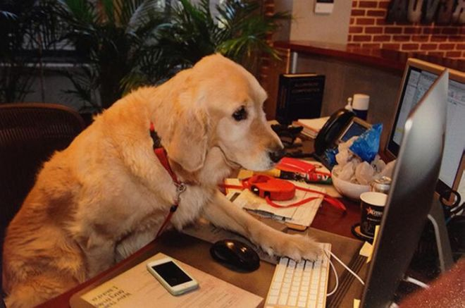 What If Dogs Went To Office?