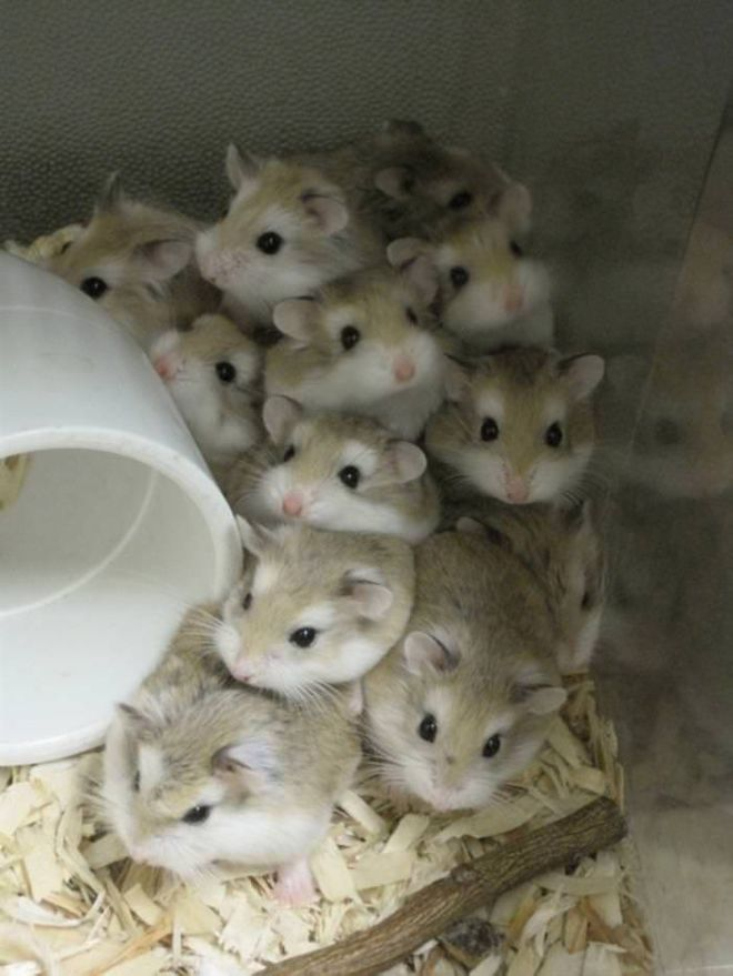20 Adorable Pictures Of Hamsters