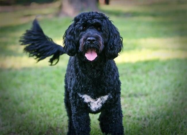 20 Rarest Dogs Breeds Around The World